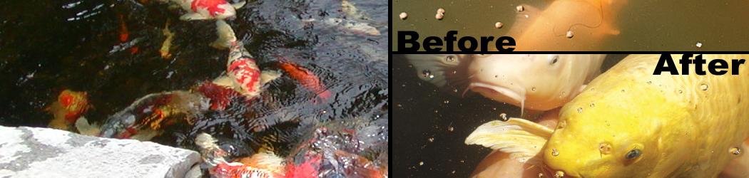Pond filters media uv waterfall pressure koi fish for Uv light koi fish pond