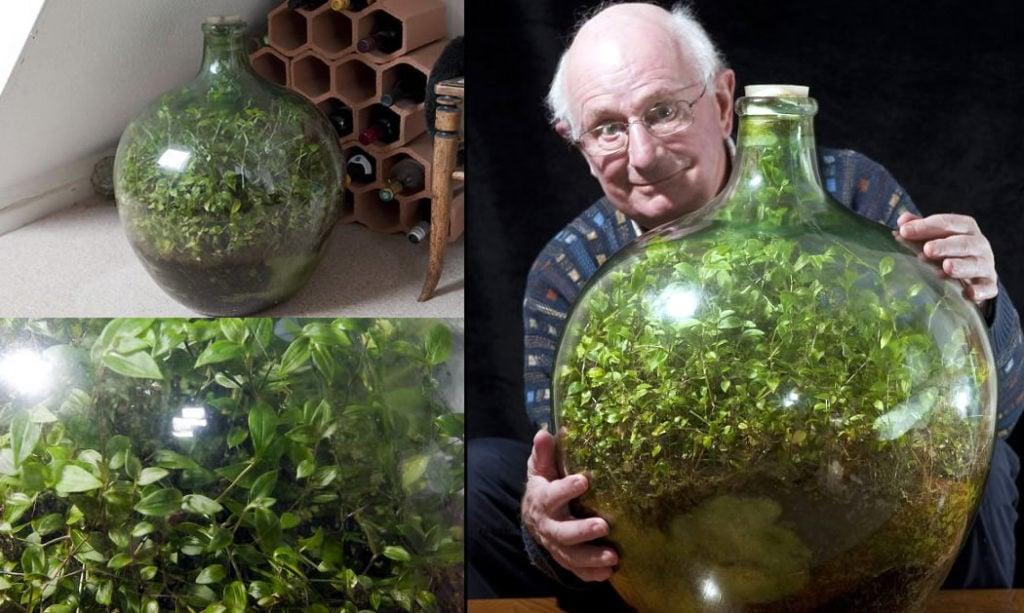 53 year old terrarium