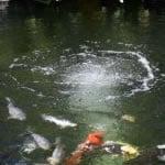 Koi Pond Aerator